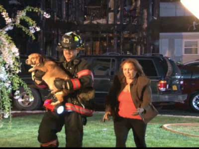 (17) When firefighters reunited the family dog with its family members, the latter went from crying on the street corner to celebrating a happy reunion.