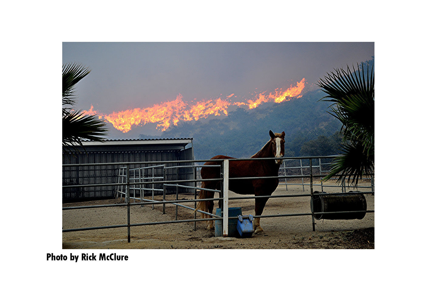 A horse int the fireground with flames roaring in the back