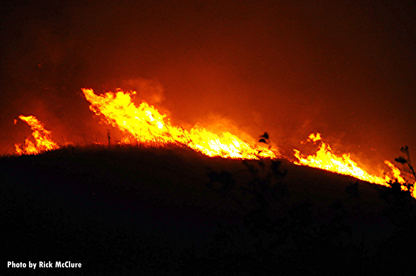 wildfire races along the ground