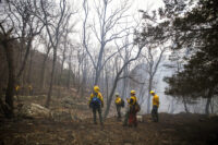 Firefighters at NJ wildland fire