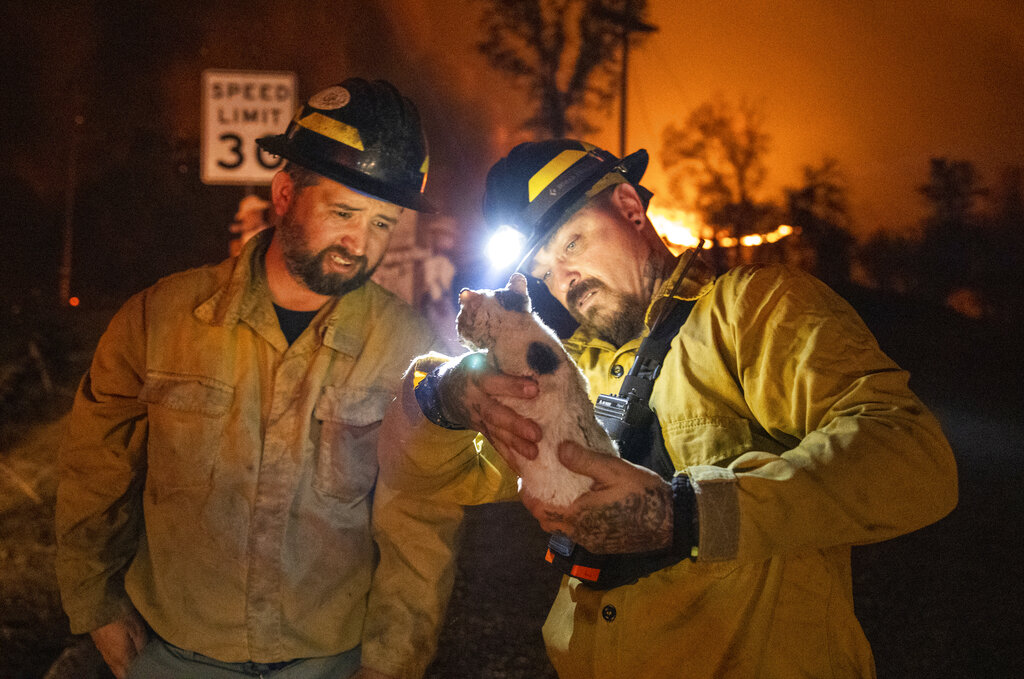 Private firefighter Bradcus Schrandt, right, holds an injured kitten while Joe Catterson assists