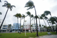Palm trees blow in the wind in Miami